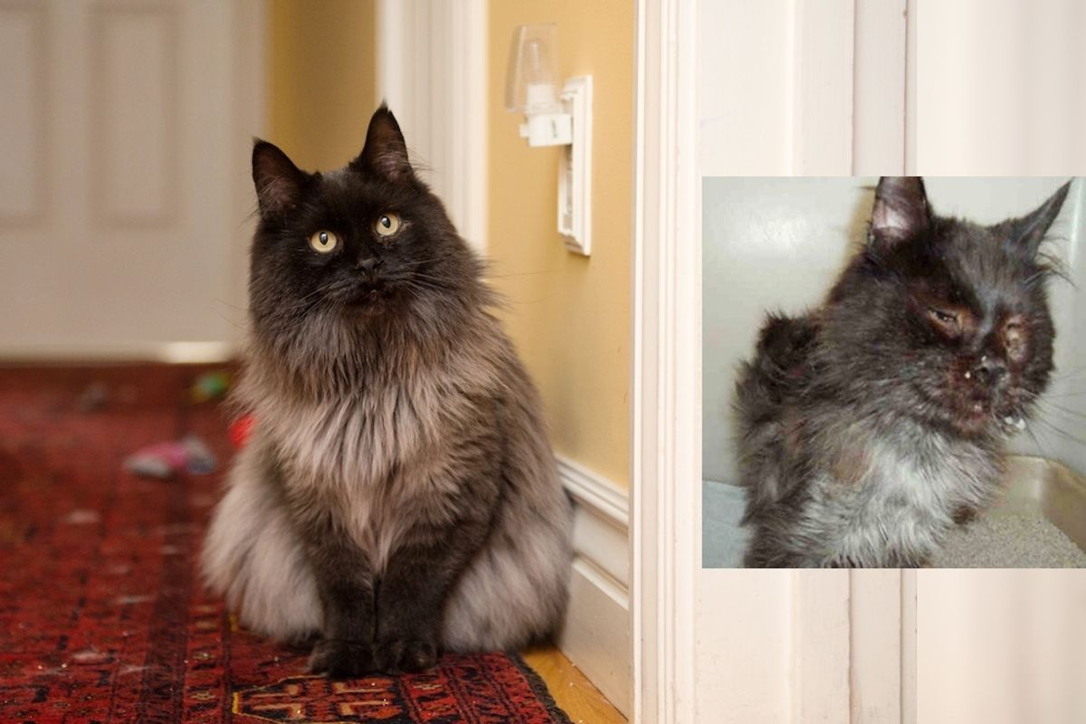 Cat Rescued from Terrible Condition Surprises Rescuers With His Glorious New Fluff