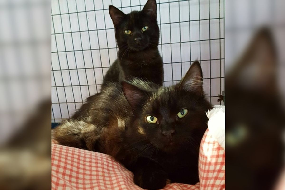 Shelter Cat Sneaks in Another Kitty's Cage So They Can Be Together