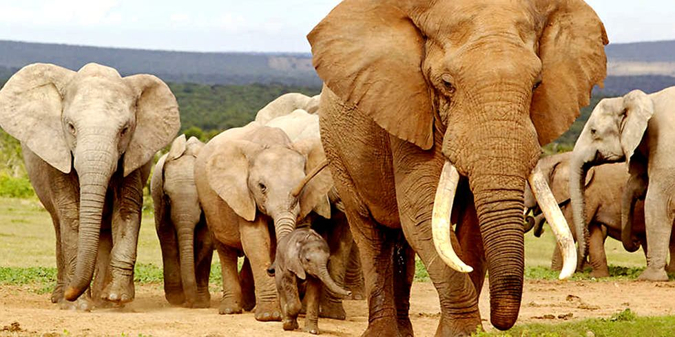 Victory: China to Ban Ivory Trade by End of 2017