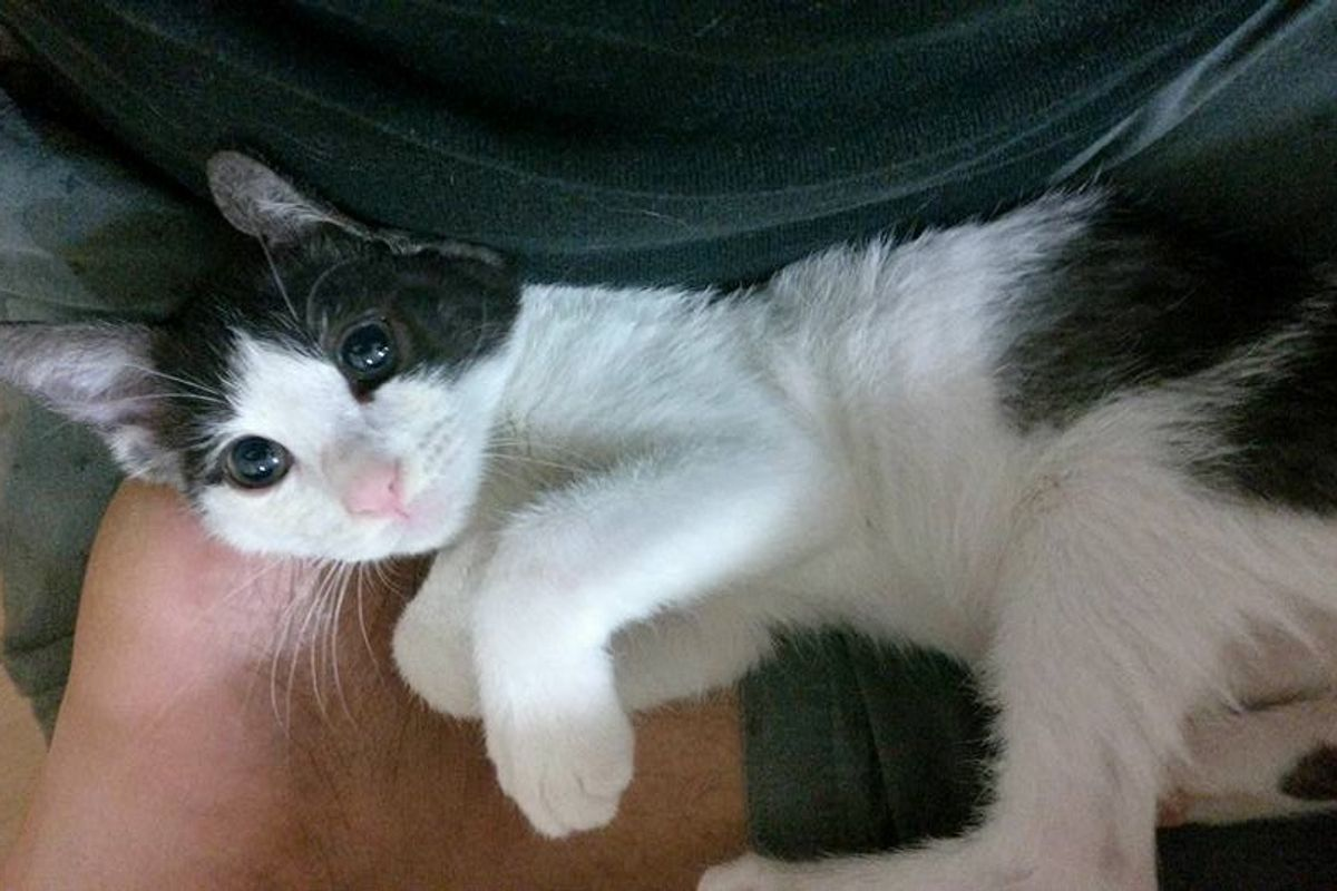 Guy Rescues Abandoned Kitten, Turns Out, the Kitten Saves Him Too