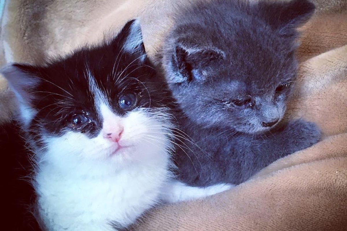 Kittens Found Holding Each Other and Wouldn't Let Go, These Photos Will Melt Your Heart..