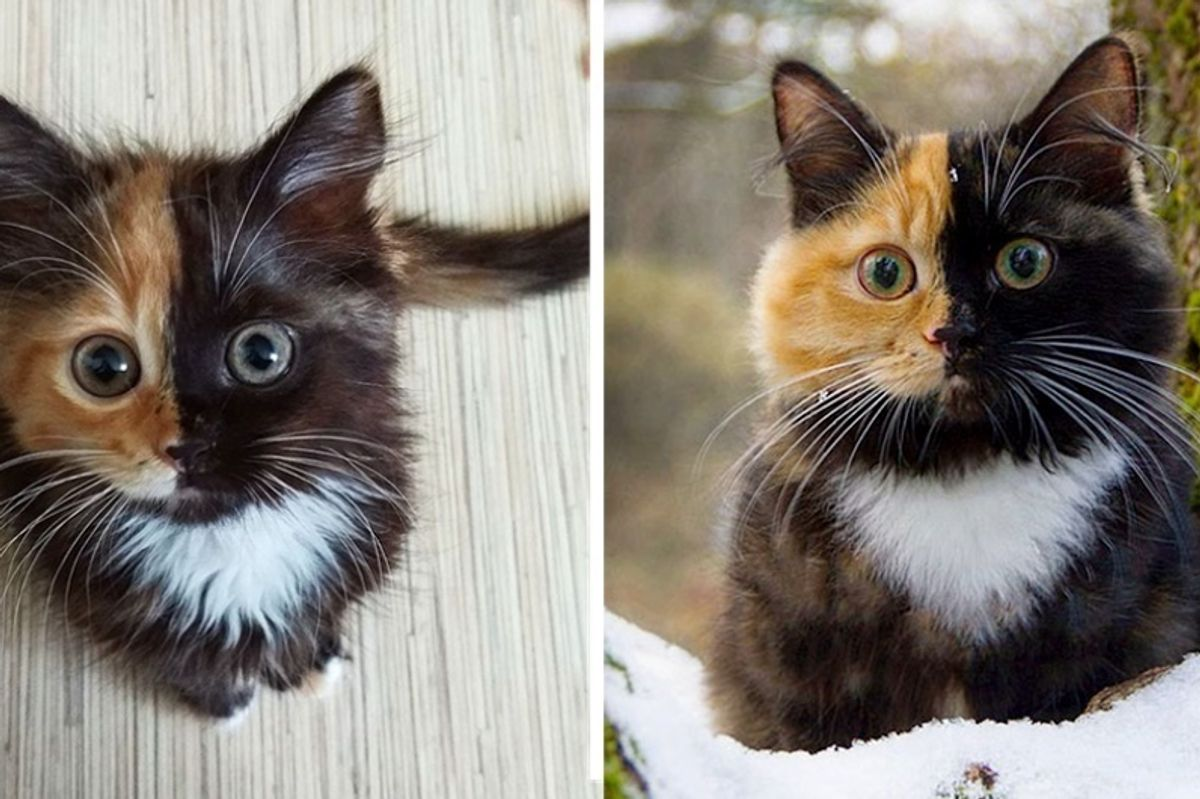 Tortie Cat Rocks Her Purrfect Two-Toned Face in These Beautiful Pictures