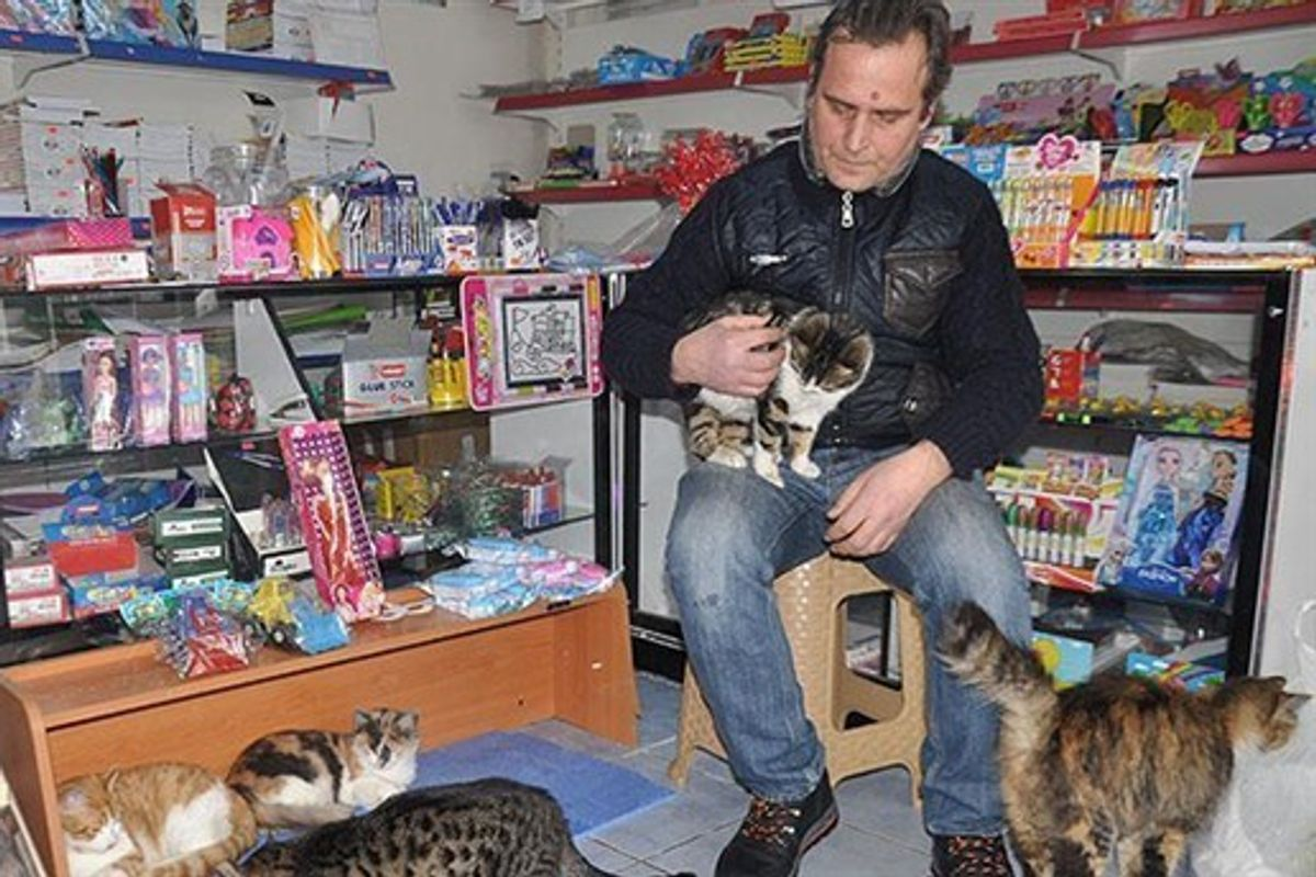 Man Turns His Shop into Refuge for Stray Cats During Harsh Snowstorm
