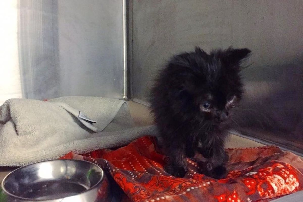 Kitten Found Next to Her Frozen Brother Survives Bitter Cold, 5 Weeks After the Rescue...