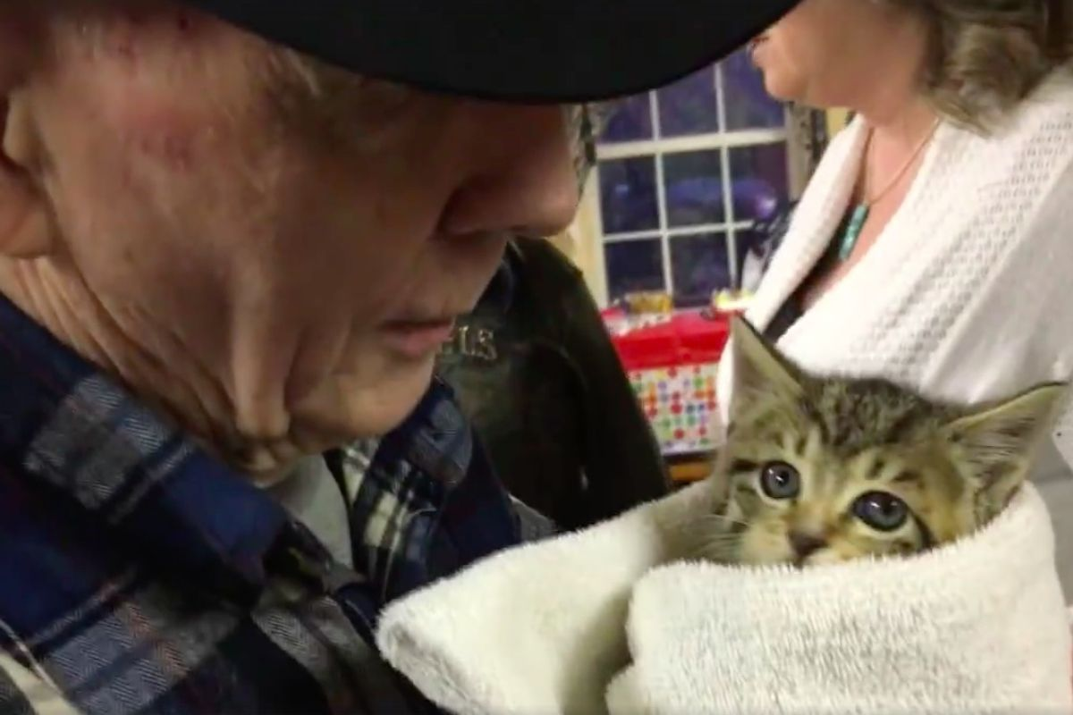 87-year-old Veteran Evicted and Prosecuted for Feeding Cats After 17 Years, Community Bands Together to Help