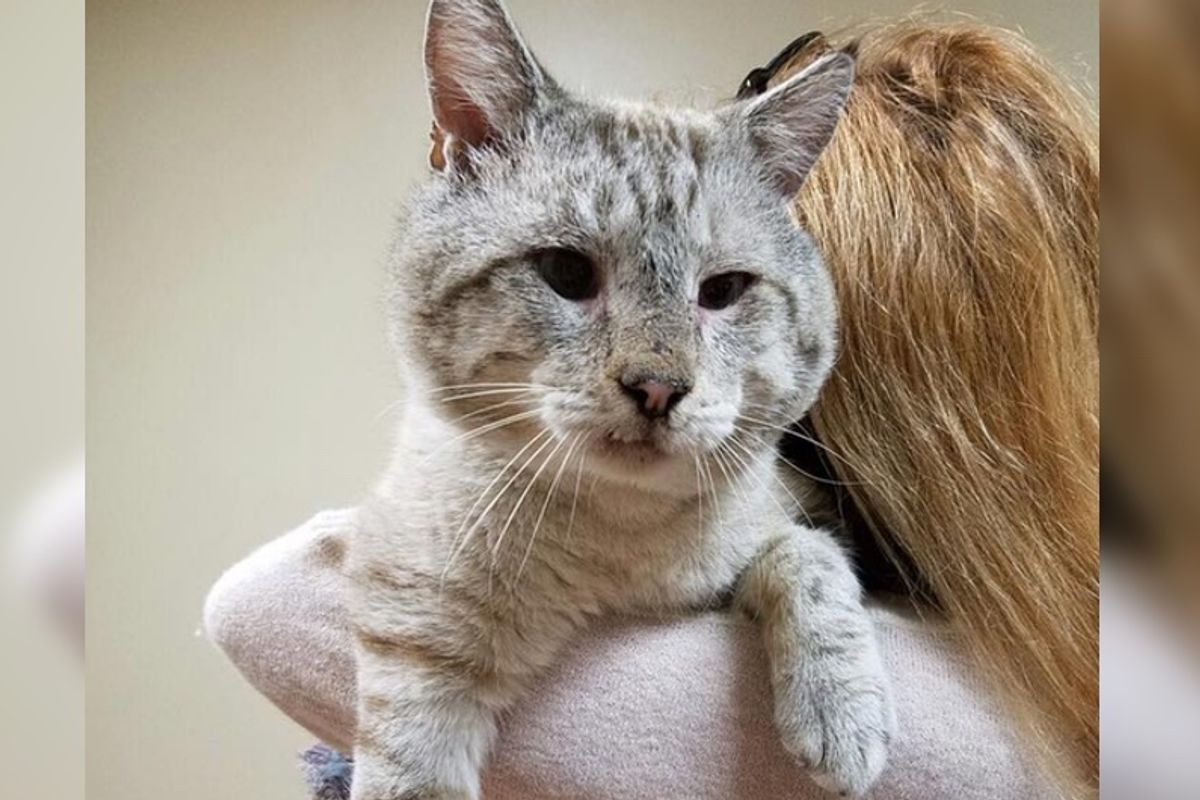 They Take a Chance on a FIV+ Cat with Sweetest Face, He Can't Stop Thanking His Rescuer