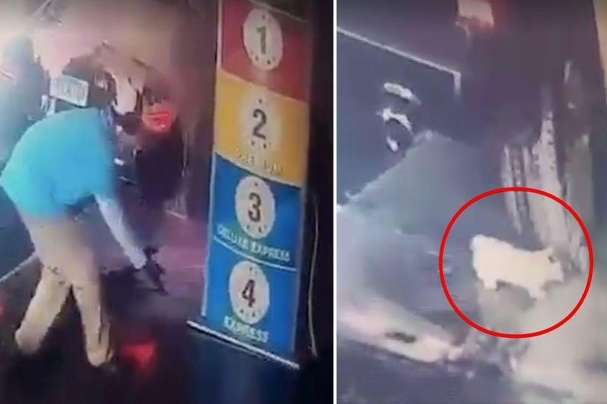 Man Saves Kitten that Falls Out of Bottom of Car During Car Wash
