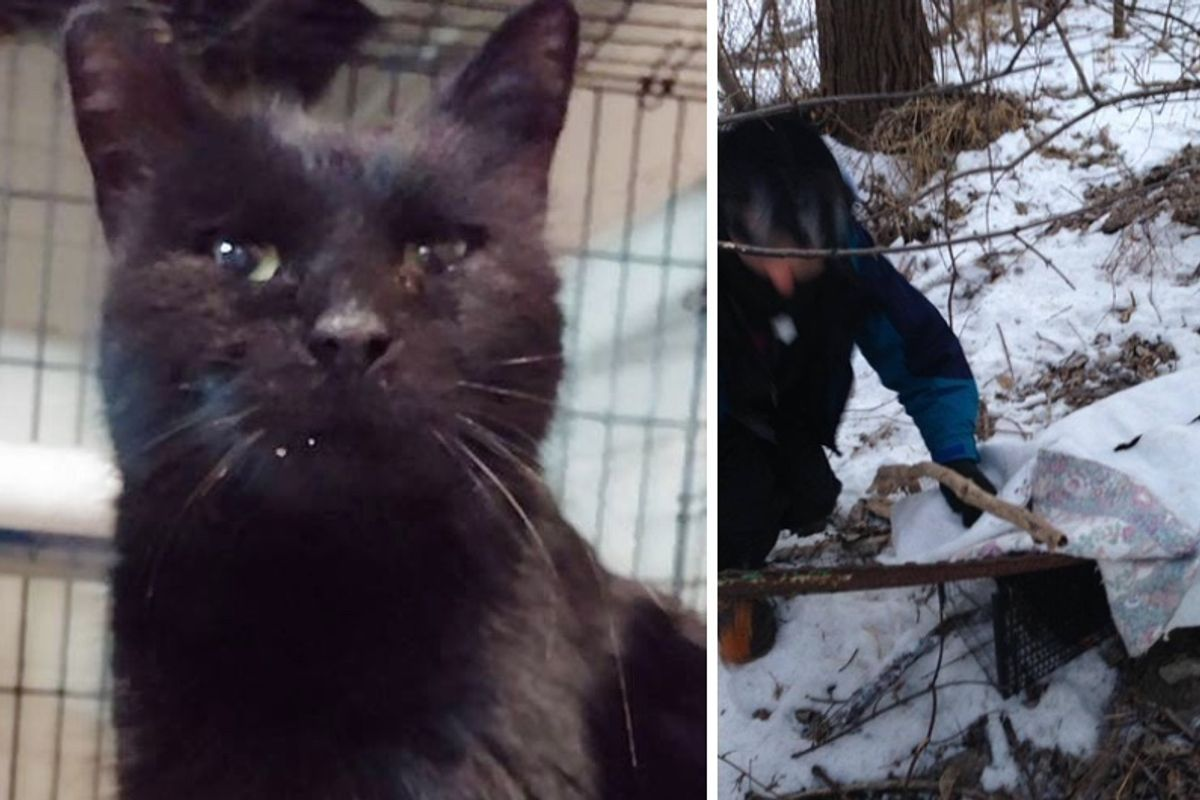 Three People Save Cat from Living Under Off Ramp in Bitter Cold, Hours After the Rescue...