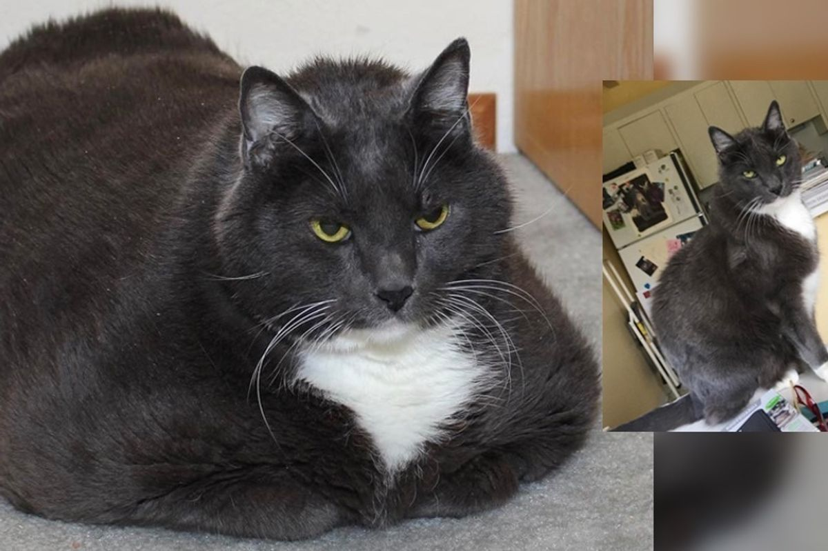 Cat Loses Over 10 Pounds in a Remarkable Journey to Find Happiness