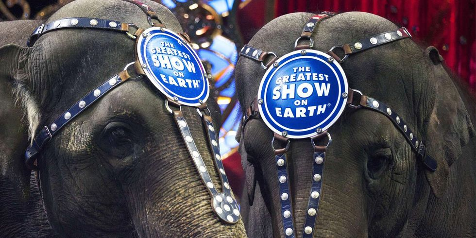 Ringling Bros. Circus Is Shutting Down After 146 Years