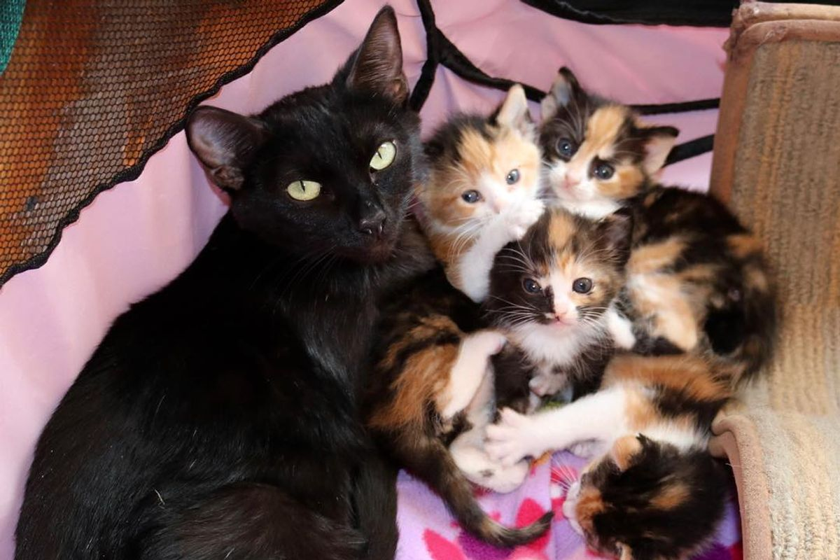 Mama Cat and Her 4 Calico Babies Rescued a Day Before Death Row, Can't Stop Purring in Foster Home