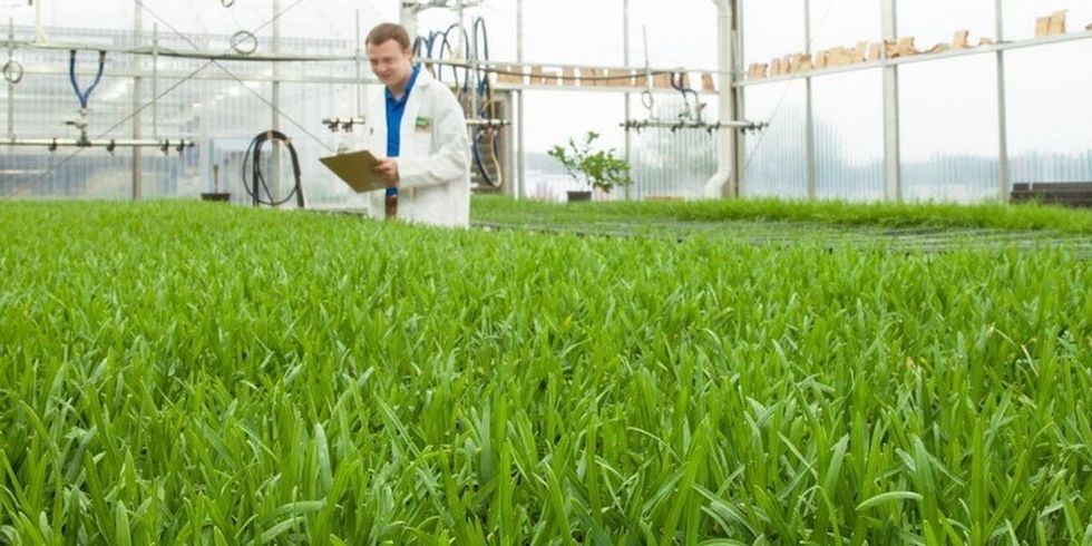 USDA Grants Final Approval for Monsanto/Scotts' Genetically Engineered Grass