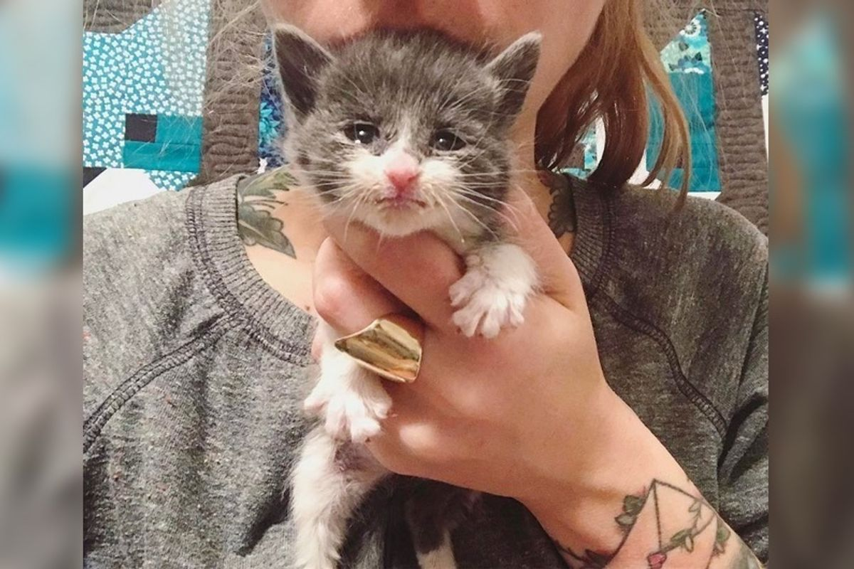 Woman Saves Tiniest Kitten Whose Mom Couldn't Care for Her, 7 Days After the Rescue...