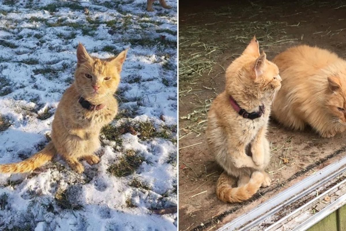 Cat Walks Up to Rescuers Like a Little Kangaroo and is so Happy to Get Help...
