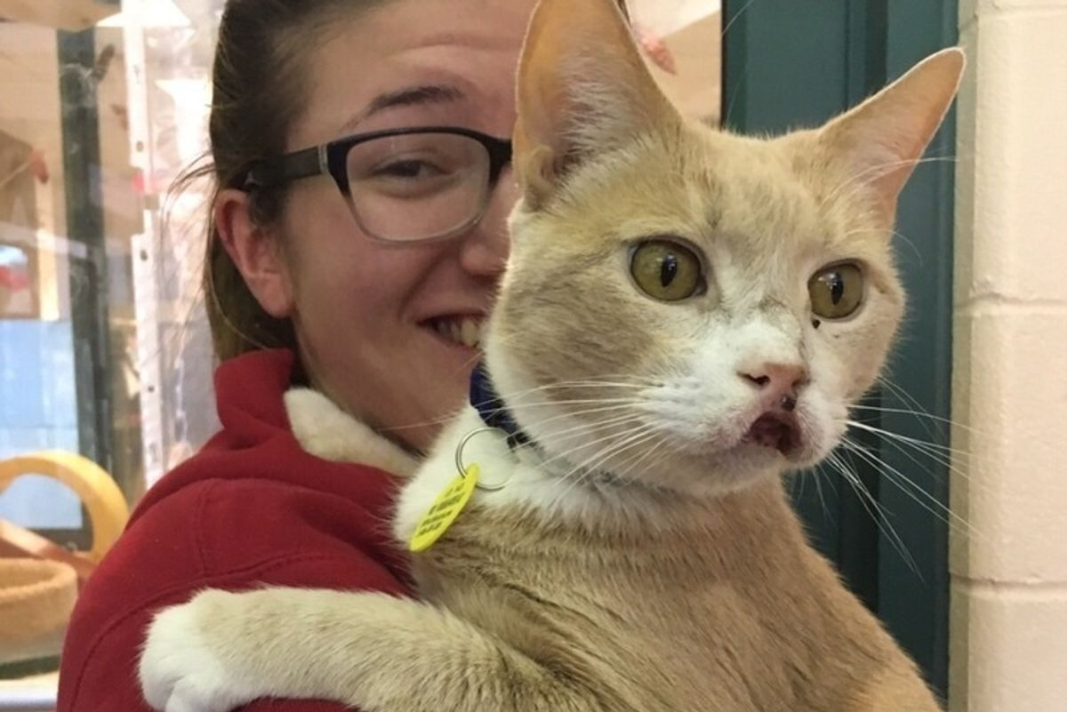 12 Year Old Cat Living with Swollen Mouth for Years Begins to Heal After Adoption..