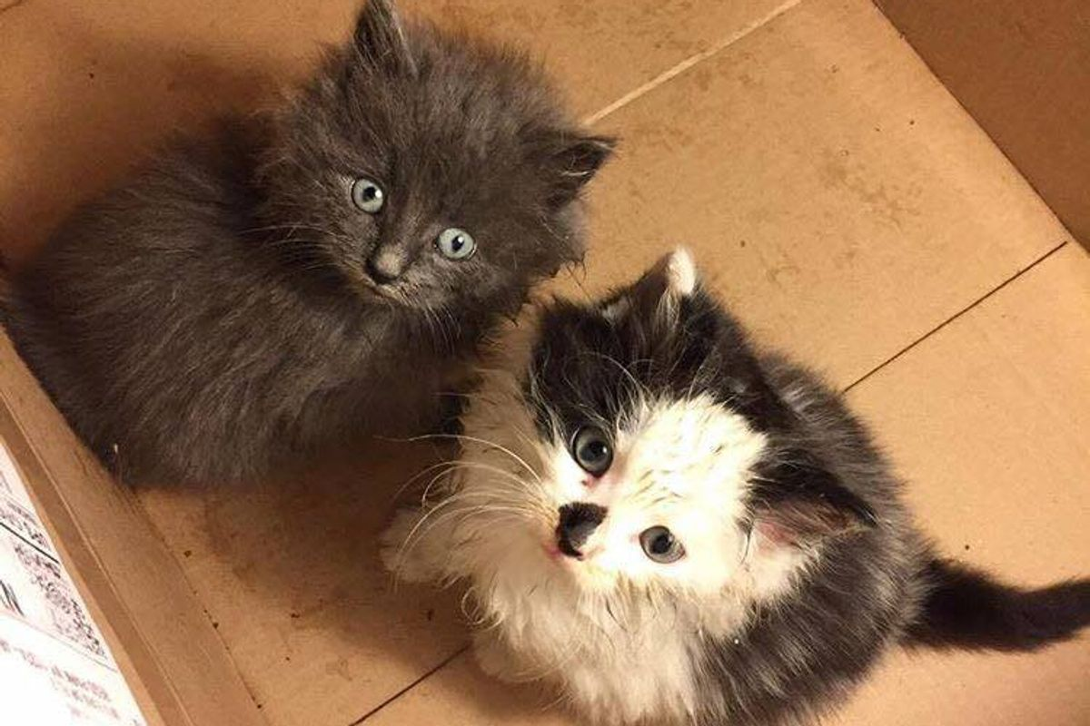 No One Wanted to Take 2 Stray Kittens, This Guy Refuses to Let Them Be Homeless