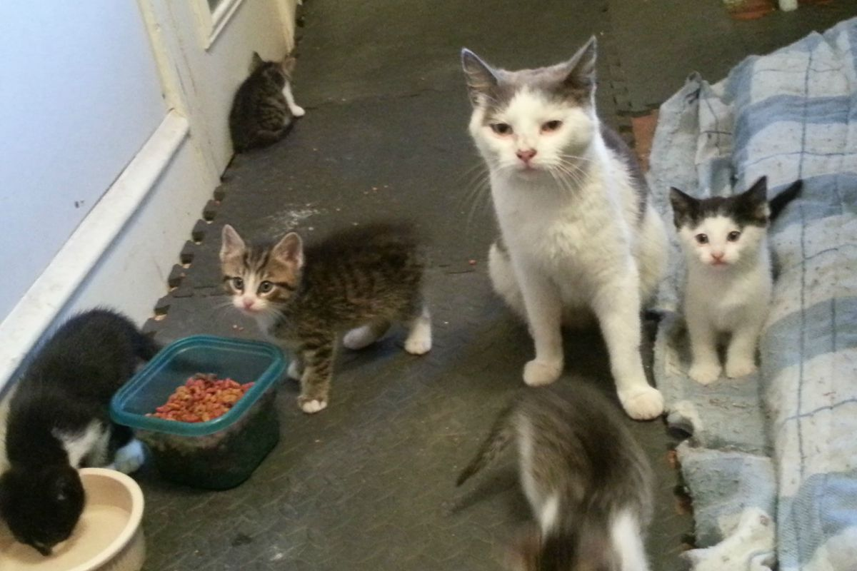 Two Brothers Feed a Fearful Feral Cat, Months Later, She Brings Her Babies to Meet Them