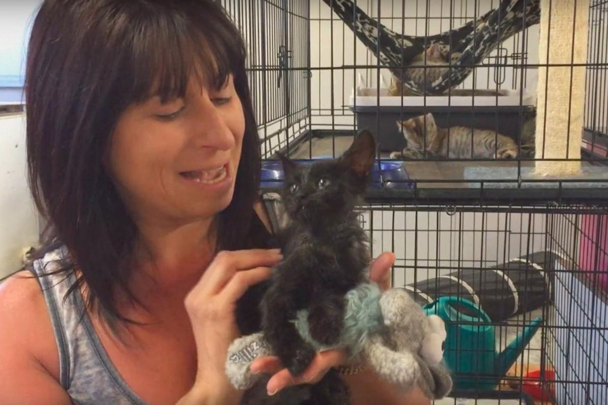 Stray Kitten Found in Barrel of Motor Oil is So Happy to be Saved and Clean!
