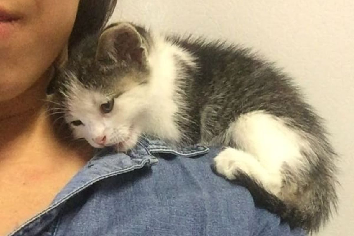 Kitten Found Alone in Pallet Yard Snuggles Up Rescuers Shoulder and Won't Let Go
