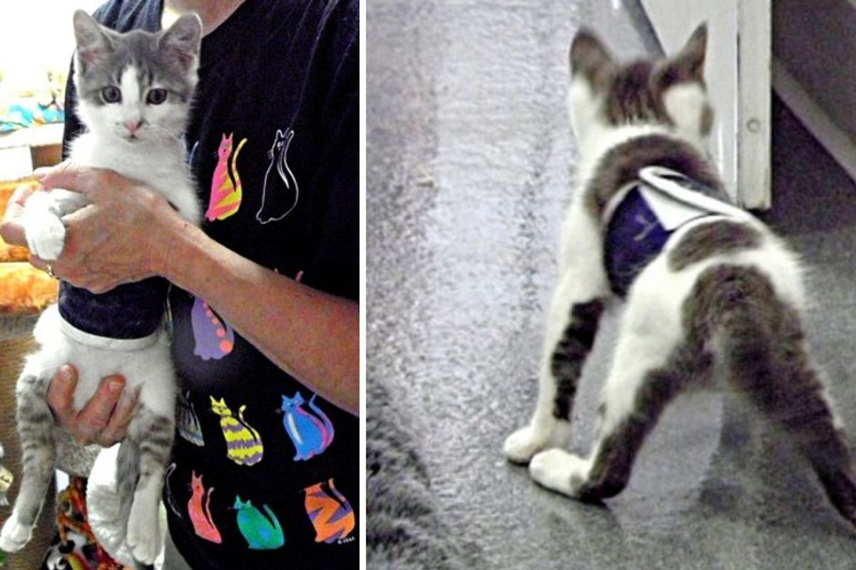 Wobbly Cat Surprises Others With What He Can Do, Now Helps Special Kitties Just Like Him..