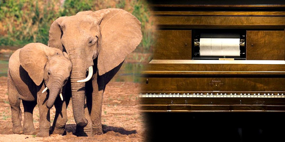 Here's What Elephant Extinction Sounds Like