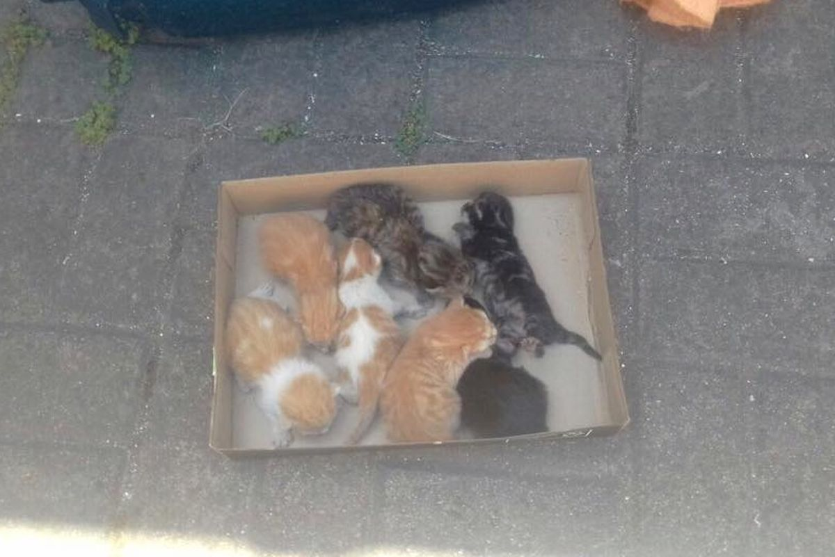 Man Saves Kittens and Refuses to Leave without the Mom, After Hours of Waiting...