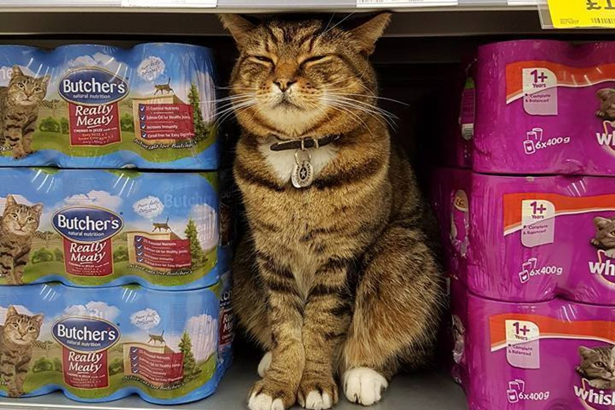 Beloved Supermarket Cat to Be Immortalized at Store He Visited Almost Every Day for 6 Years...