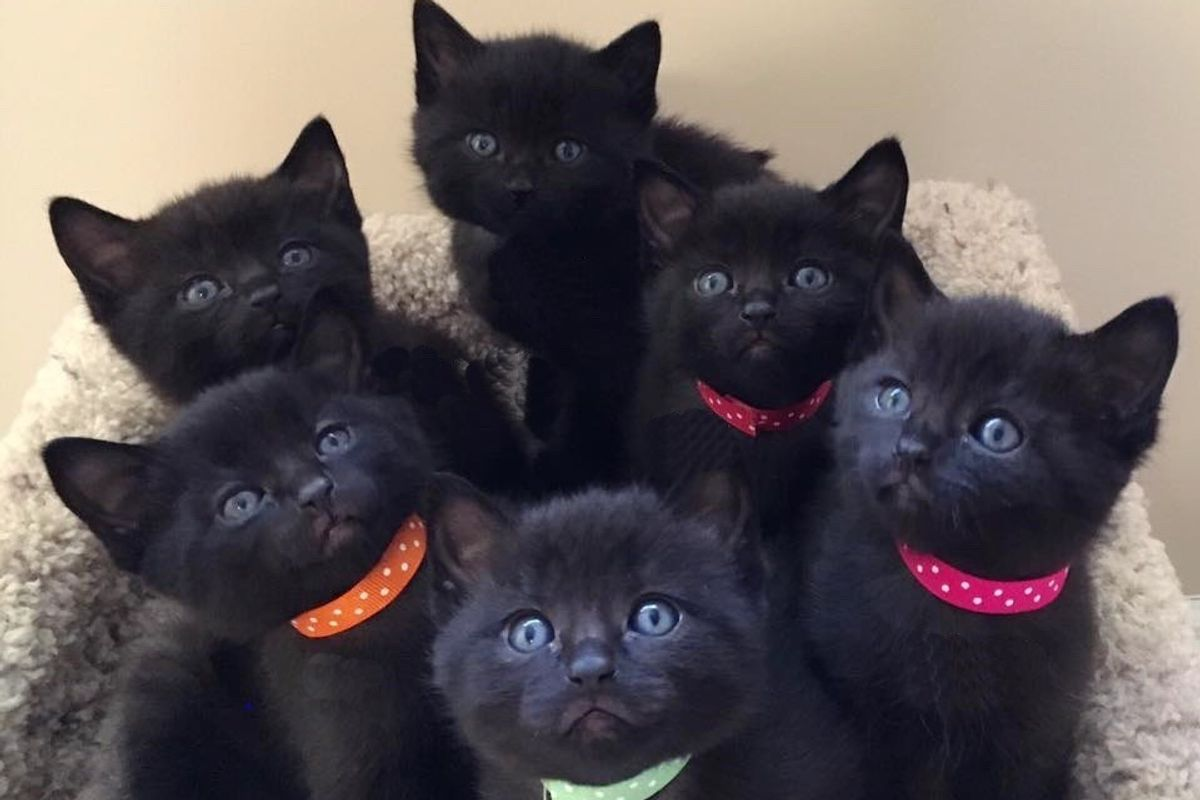 """Stray Cat Saved from the Cold Brings Six Mini """"Panthers"""" to Her Rescuers..."""