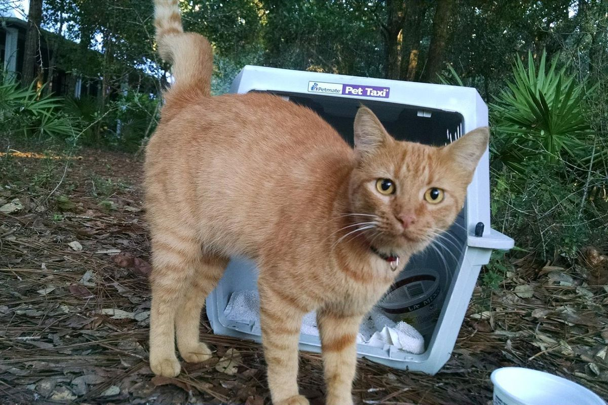 Woman Couldn't Believe It When a Ginger Cat Ran Up to Her Meowing for Love...