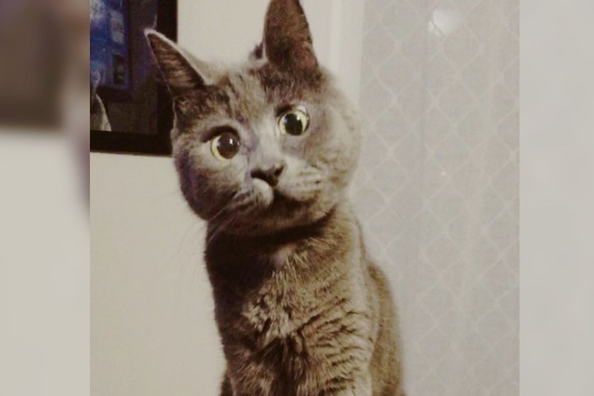 They Said This Special Cat Wouldn't Live to See 6 Months, Now 4 Years Later and Updates...