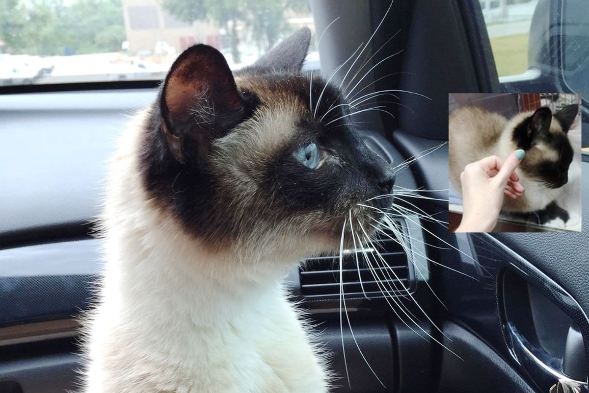 shelter cat chooses woman to adopt