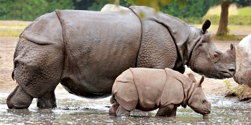 Desperate to Protect Rhinos, Rangers Shoot Poachers in India