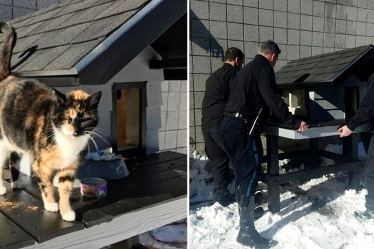 Cops Chosen by Friendly Stray Cat Build Cozy Kitty Condo Just for Her...