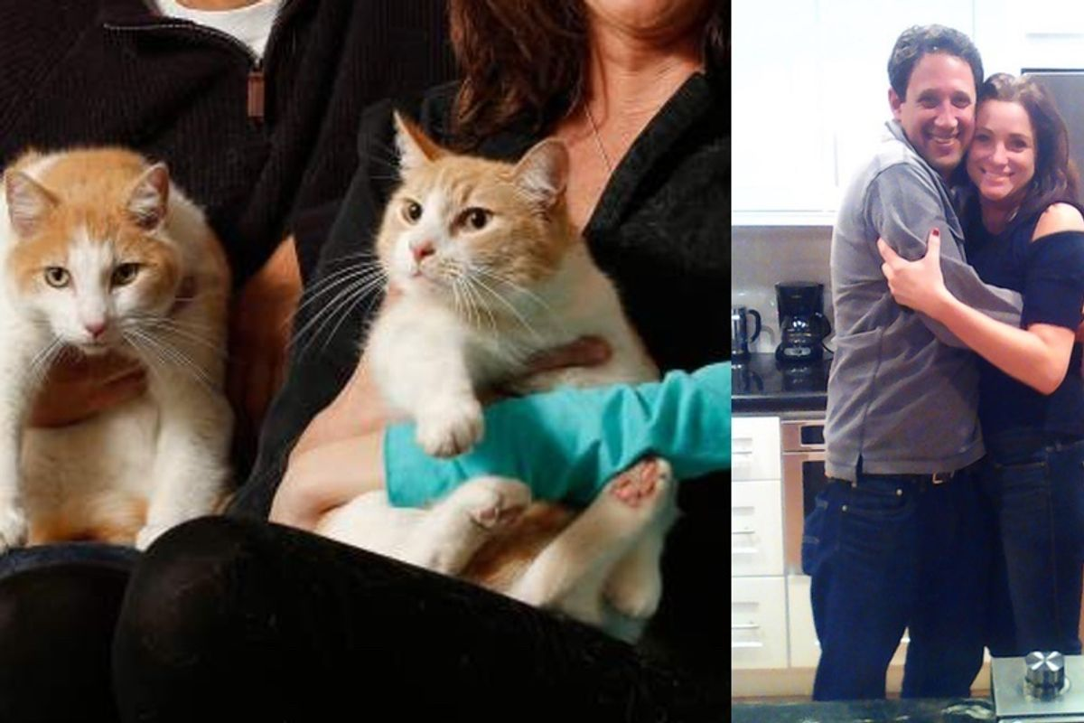 Cat Brothers Separated for 2 Years Find Each Other When Their Humans Start Dating...