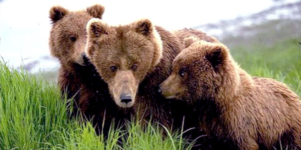 House Passes NRA-Backed Bill Legalizing the Killing of Bear Cubs in Wildlife Refuges
