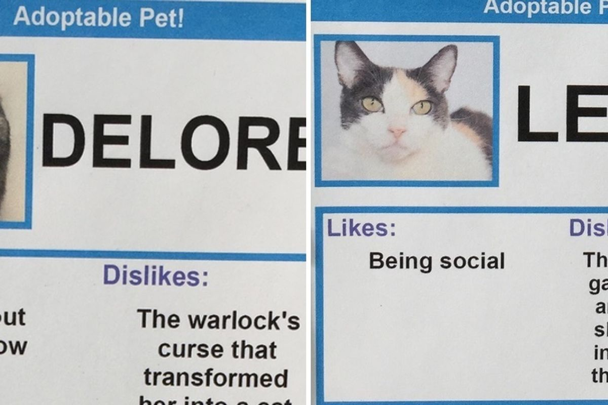 Man Gives These Shelter Cats Unusual 'Likes' And 'Dislikes' To Help Find Them Homes..