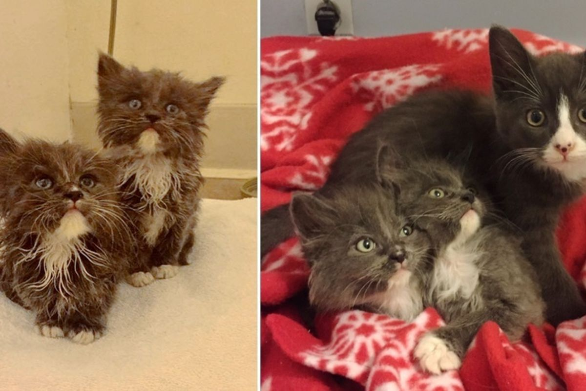 Kitty Becomes Brother to Two Tinier Orphaned Kittens Who Look Just Like Him..