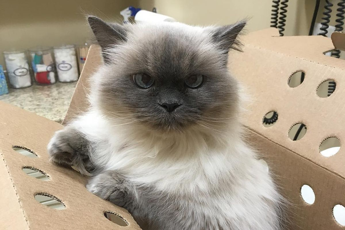 14-year Old Shelter Cat Who Lost Her Home Runs Up to Woman Asking to be Adopted...