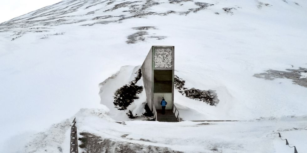 50,000 Seeds Deposited to 'Doomsday Vault' Housing World's Largest Collection of Crop Diversity