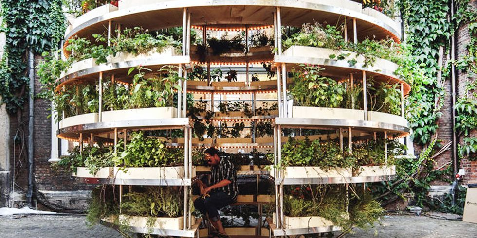The Indoor Garden That Can Feed an Entire Neighborhood