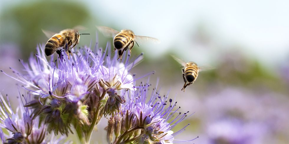 This City Just Set Aside 1,000 Acres to Save Honey Bees