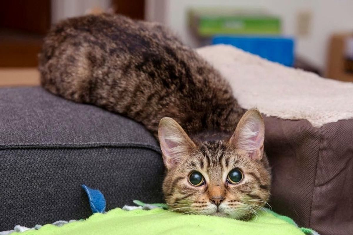 This Blind Kitty is a Bit Wobbly But He Surprises His Rescuers with His Special 'Abilities'...