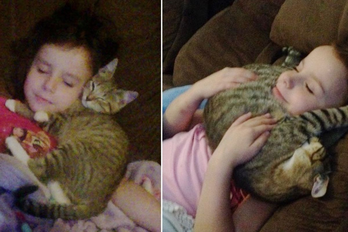 Little Girl Refused to Leave Until They Saved Stray Kitten from the Woods, Now 2 Years Later..