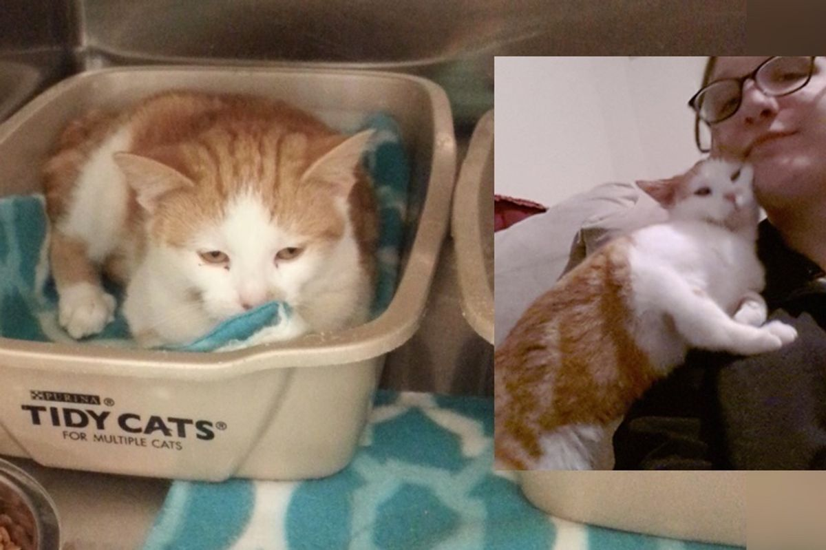 Kitten Too Scared to Leave Her Box at Shelter, Then a Month After Adoption..