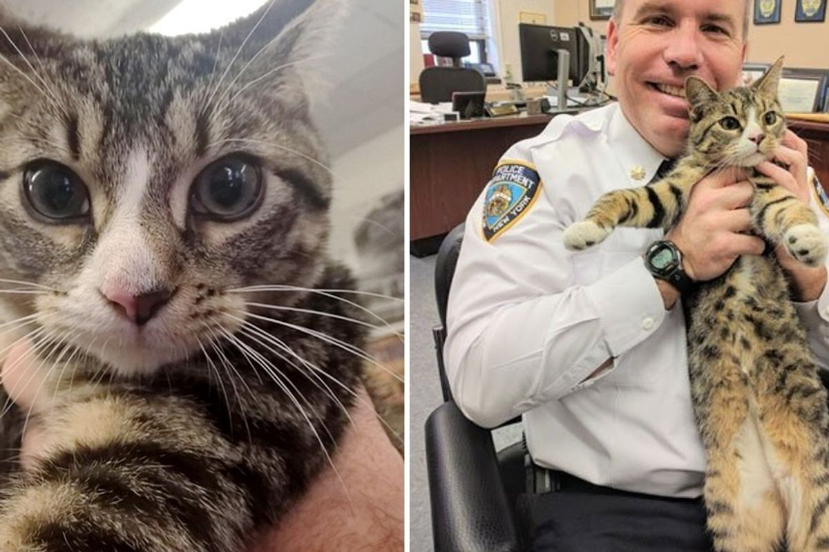 Cops Convince Boss to Adopt Abandoned Kitten They Saved...