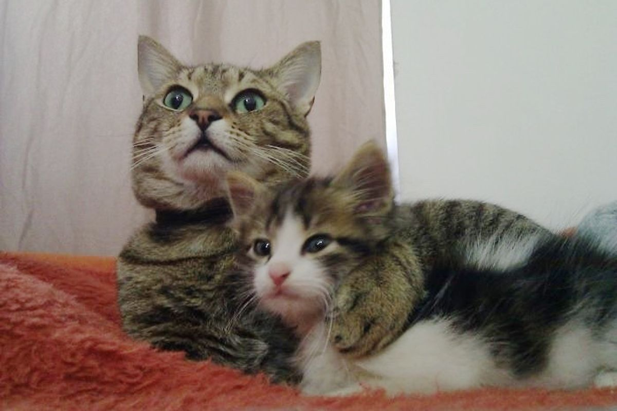 Their Cat Took in a Little Orphaned Kitten and Decided to Be His Dad, Then and Now...