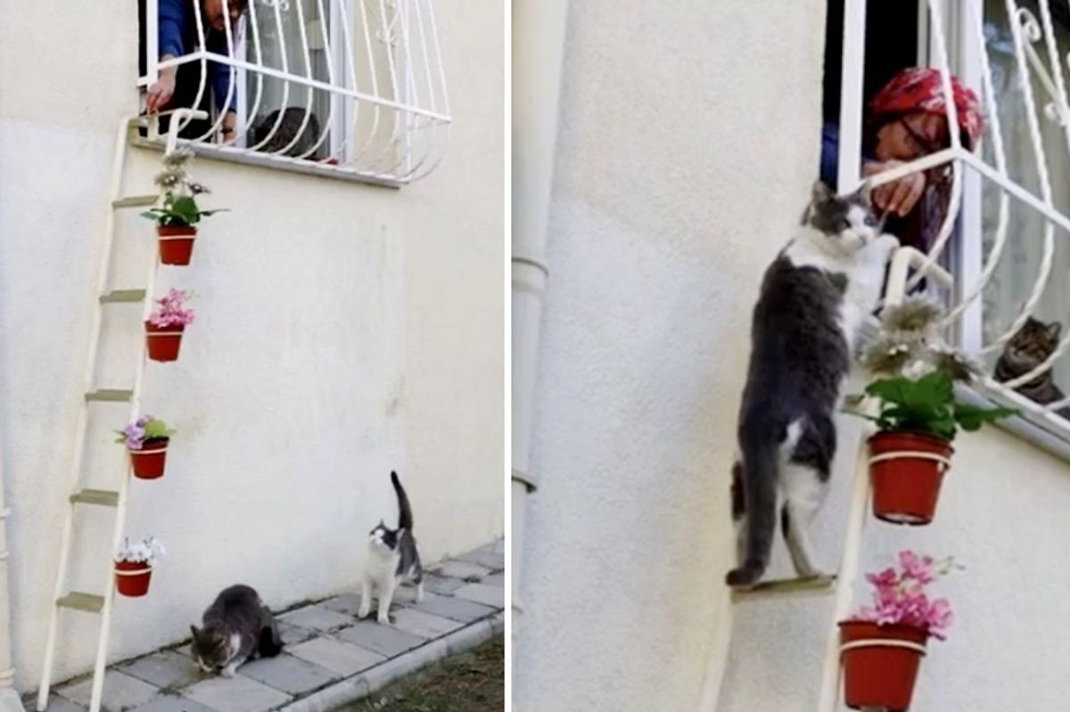 """Woman Builds """"Cat Ladder"""" for Stray Cats to Enter Her Home from Bitter Cold.."""
