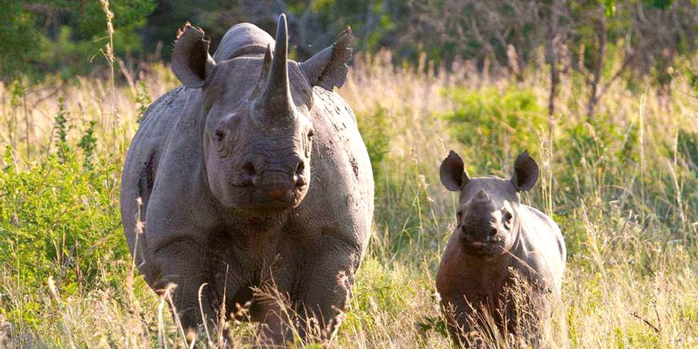 1,000+ Rhinos Poached in South Africa for Fourth Straight Year