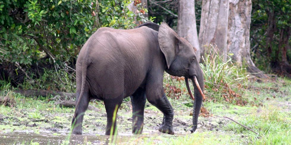 'No Place Is Safe From Poaching': 25,000+ Elephants Killed in Key African Reserve