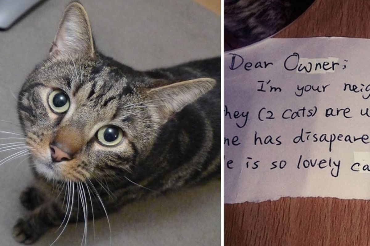 Couple Mourning Their Cat Find a Note from a Stranger Whose Life was Touched by Their Cat…
